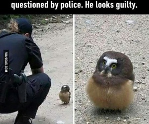 funny, owl, and lol image