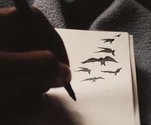 birds and black image