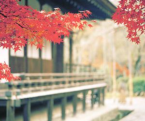 japan, beautiful, and photography image