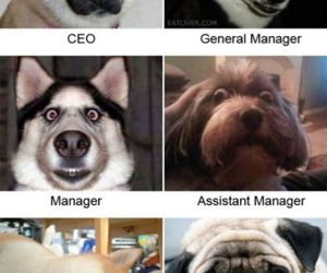 <3, lol, and dogs image