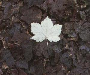 leaves, autumn, and white image