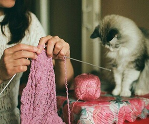 cat, vintage, and knitting image