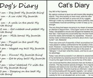 cat, kitty cat, and diary image