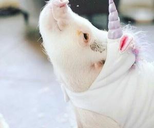 pig, cute, and unicorns image