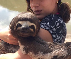 vacations, peru, and lucythesloth image