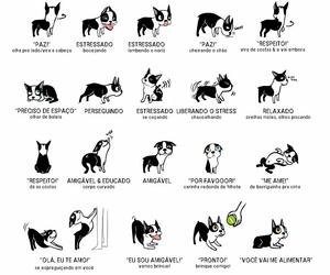 border collie, cachorro, and dog image