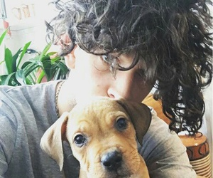 the 1975, matty healy, and puppy image
