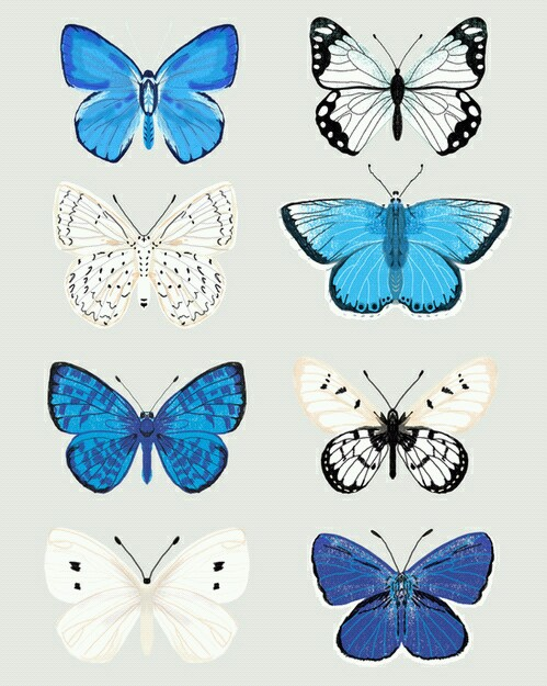 butterfly and blue image