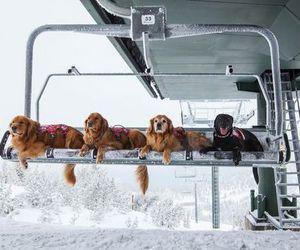 dog and snow image