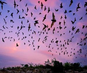 sky, bird, and pink image