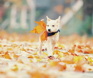 cute, autumn, and beautiful image
