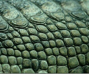 green and crocodile skin image