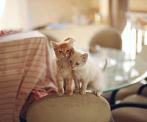 animal, cats, and kitty image