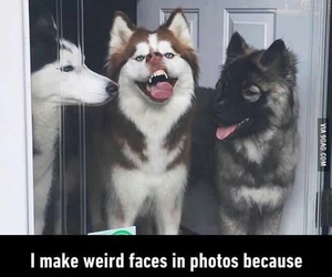 dogs, funny, and animals image