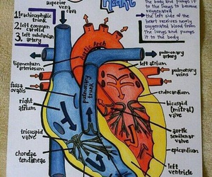 heart and study image