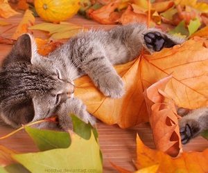 cat, cute, and autumn image