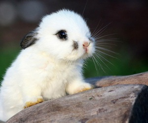 adorable, fluffy, and rabbit image