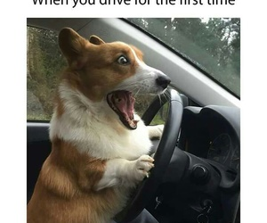 car, dog, and driving image