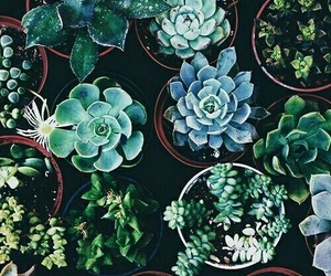 plants, wallpapers, and backgrounds image