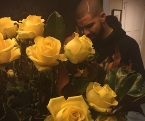Drake and flowers image