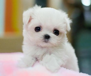 blanket, pink, and puppy image