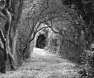 b&w, tree tunnel, and uk image