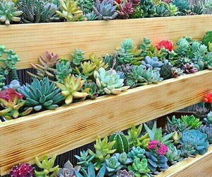 plants, succulent, and cute image