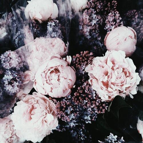flowers and canipostthistomyinsta image