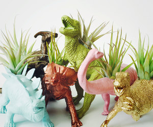 air plant, dinosaur, and customize image
