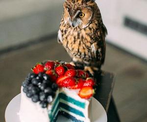 bird, birthday, and cake image