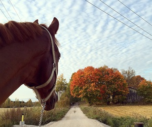 autumn, equestrian, and fall image
