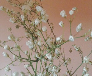 aesthetic, babys breath, and flowers image
