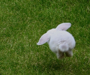 rabbit, bunny, and cute image