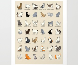 cat lady, cats, and cat vs human image