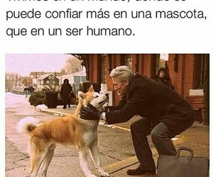 animals, dog, and frases image