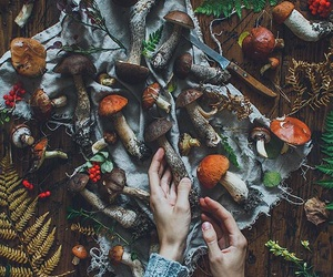autumn, fall, and mushrooms image