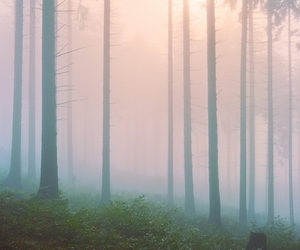 forest, tree, and nature image