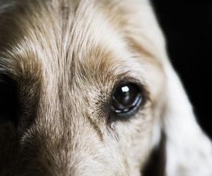 dark, dog, and sad image