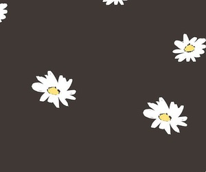 flower, black, and background image