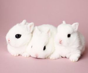 adorable, animals, and bunny image