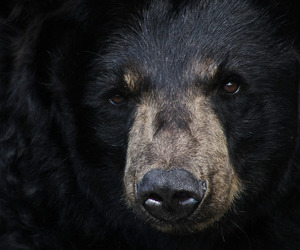 bear, animal, and black image