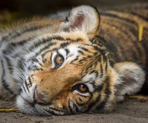 autumn, cat, and cub image