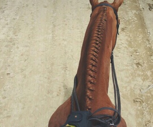 beautiful, horse, and life image