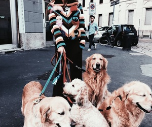 chic, fashion, and dogs image