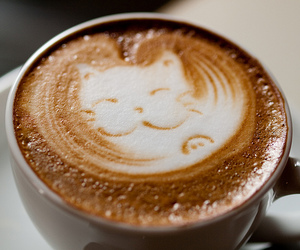 cat, coffee, and coffe image