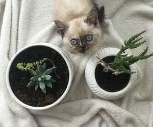 cats, harmony, and plants image