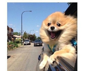 dog, fly, and happy image