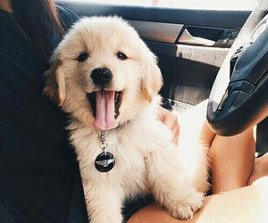animal, car, and puppy image