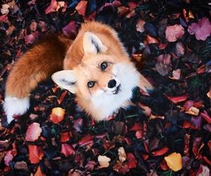 pretty animals image