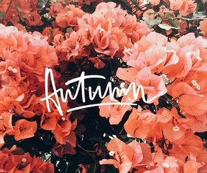 autumn, flowers, and beautiful image